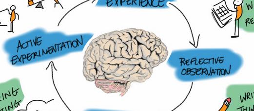 kolb brain